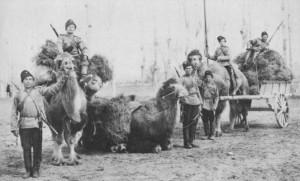 Казаци с камили
