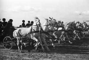 Червената кавалерия